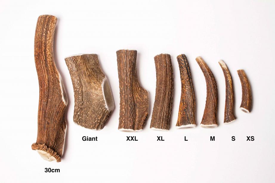 Bois de cerf entiers XS à Giant