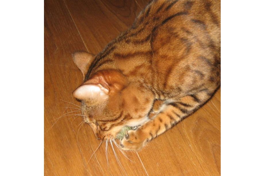 Balle d'herbe à chat