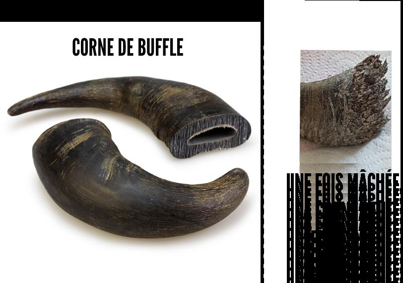 corne de buffle