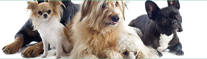 Bois de cerf à mâcher, la friandise 100% naturelle pour votre chien