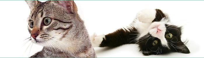 Friandises et jouets 100% naturels pour votre chat