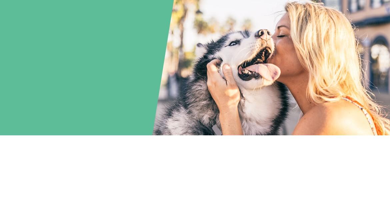 Boisdecerfamacher.com, le plaisir partagé avec votre chien