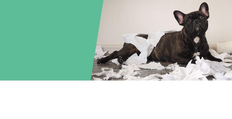 Boisdecerfamacher.com, la solution douce aux petits tracas du quotiden de votre chien