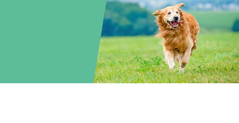 évident, des friandises 100% naturelles pour votre chien !